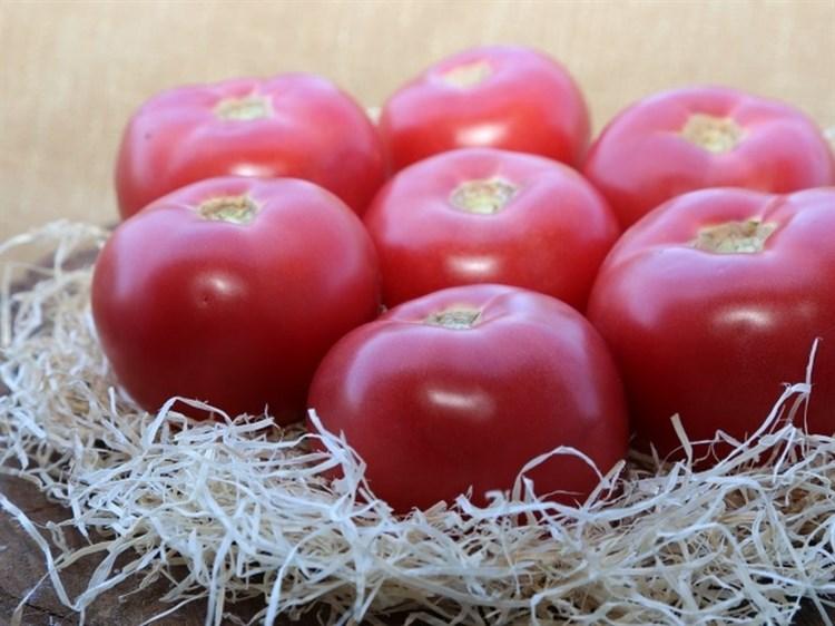 Мей Шуай F1, семена томата индетерминантный (Seminis / Семинис) - фото 4545