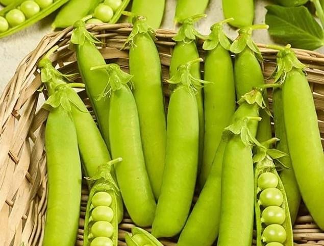 Женева, семена гороха (Nunhems / Нюнемс) - фото 4682