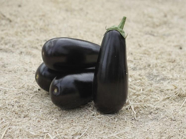 Эпик F1, семена баклажана (Seminis/Семинис) - фото 4733