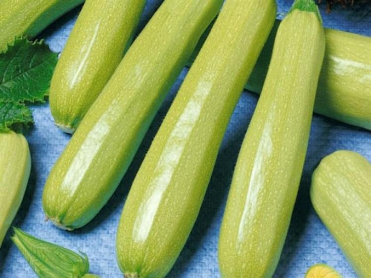 Сцилли F1, семена кабачка (Seminis / Семинис) - фото 4740
