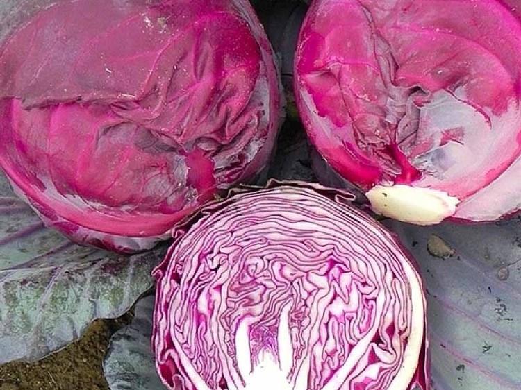 Рокси F1, семена капусты краснокочанной (Seminis / Семинис) - фото 4788
