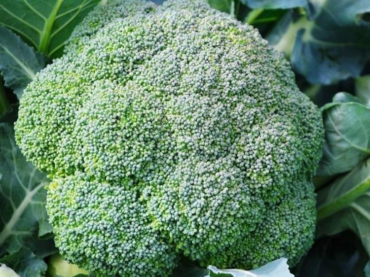 Айронмен F1, семена капусты брокколи (Seminis / Семинис) - фото 4790