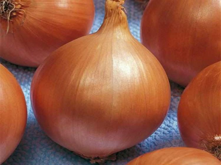 Рокита F1, семена лука репчатого (Seminis / Семинис) - фото 4820