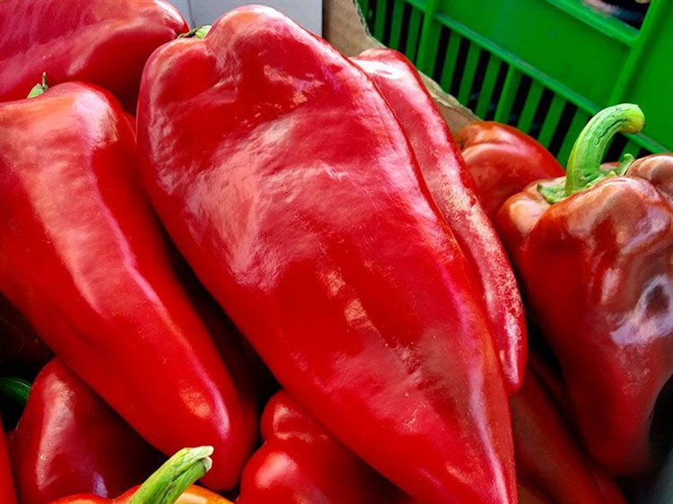 Каптур F1, семена перца сладкого (Seminis/Семинис) - фото 4912