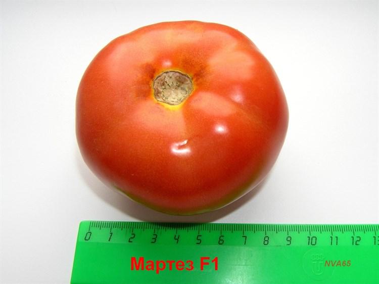 Мартэз F1, семена томата индетерминантный (Seminis / Семинис) - фото 4954