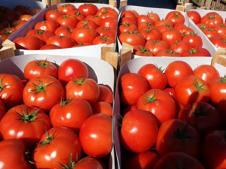 Магнус F1, семена томата полудетерминантный (Seminis / Семинис) - фото 4978