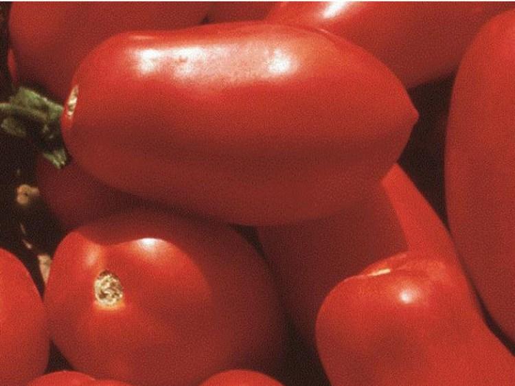 Гердон F1, семена томата детерминантный (Seminis / Семинис) - фото 4986