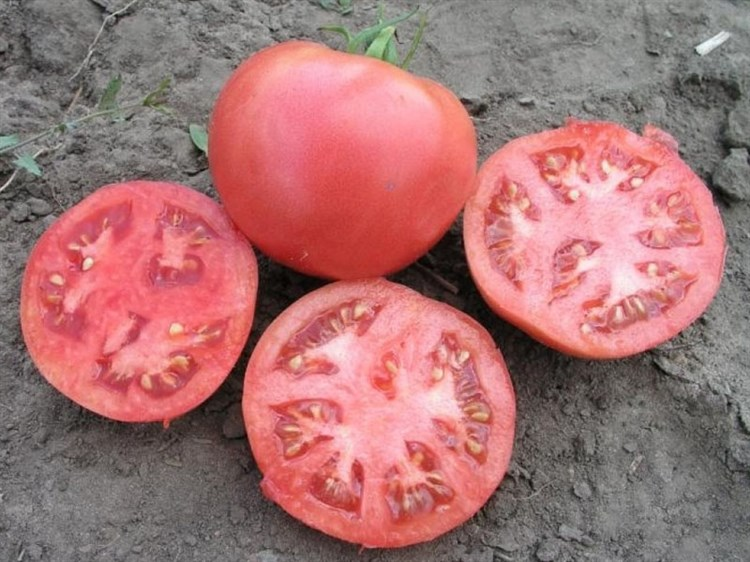 Розализа F1, семена томата детерминантный (Seminis / Семинис) - фото 4999
