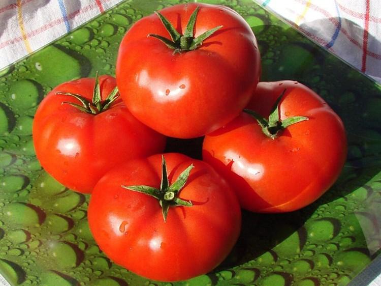 Садик F1, семена томата детерминантный (Seminis / Семинис) - фото 5002