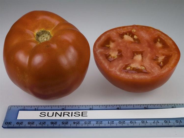 Санрайз F1, семена томата детерминантный (Seminis / Семинис) - фото 5003