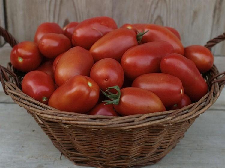 ХайПил -108 F1, семена томата детерминантный (Seminis / Семинис) - фото 5011