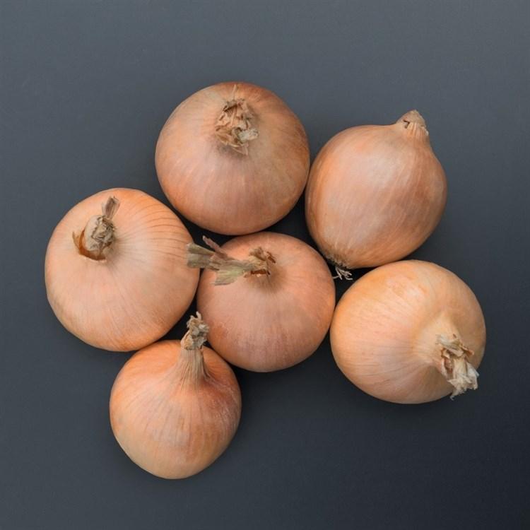 Орланда F1, семена лука репчатого (Bejo / Бейо) - фото 5202