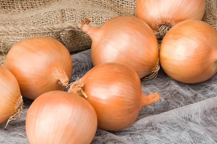 Талон F1, семена лука репчатого (Bejo / Бейо) - фото 5213