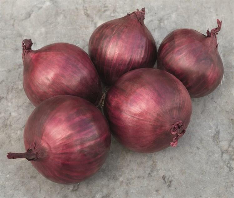 Ред Рам F1, семена лука репчатого (Bejo / Бейо) - фото 5226