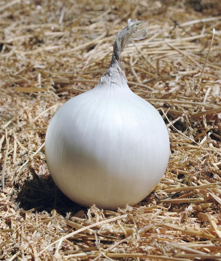 Айсперл F1, семена лука репчатого (Bejo / Бейо) - фото 5232
