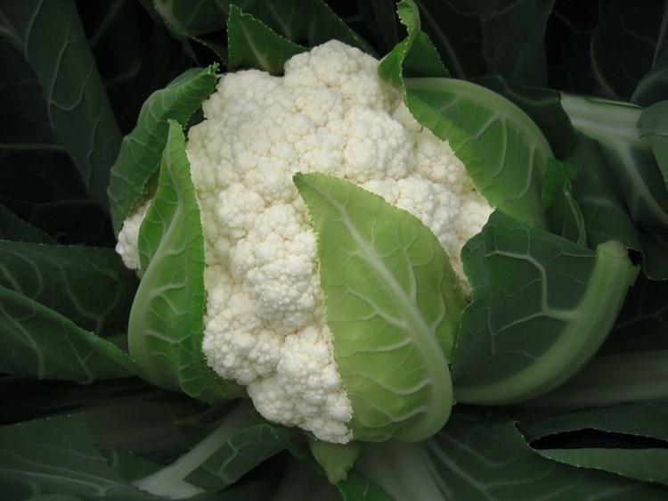Фламенко F1, семена капусты цветной (Bejo / Бейо) - фото 5557