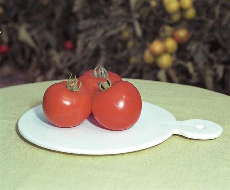 Полфаст F1, семена томата детерминантный (Bejo / Бейо) - фото 5605