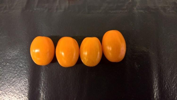 ST-52, семена томата индетерминантного (Wing Seeds / Винг Сидс) - фото 5828