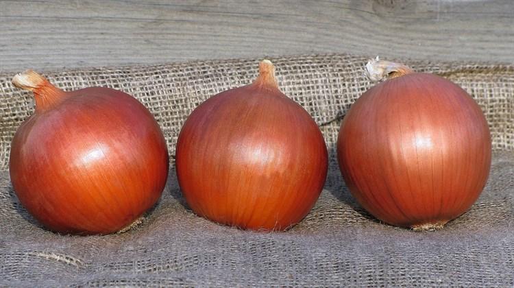 Сонома F1, семена лука репчатого (Bejo / Бейо) - фото 5950