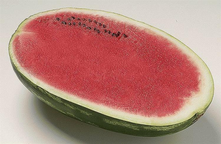 Фарао F1, семена арбуза (Syngenta / Сингента) - фото 6018