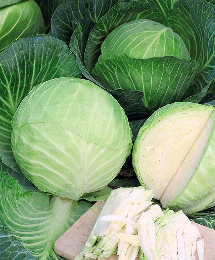 Сорта капусты белокочанной фото с названием