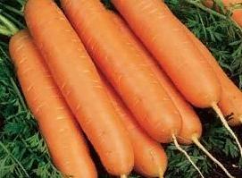 Юкон F1, семена моркови (Syngenta / Сингента) - фото 6068
