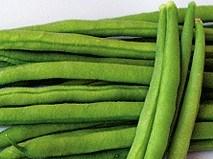 Вердигон, семена фасоли (Syngenta / Сингента) - фото 6069