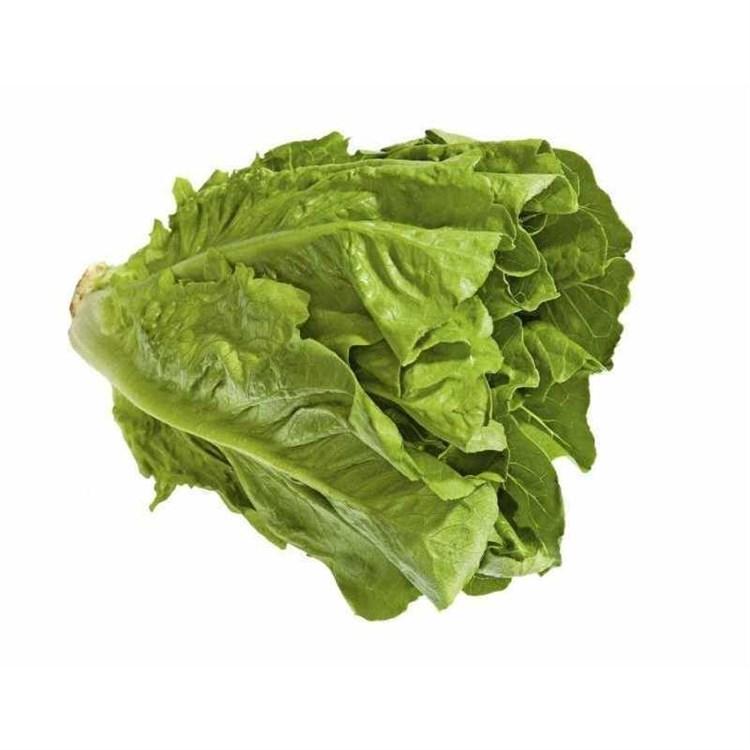 Типикал, семена салата ромэн (Syngenta / Сингента) - фото 6076