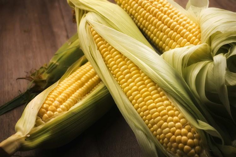Шайнрок F1, семена кукурузы (Syngenta / Сингента) - фото 6081