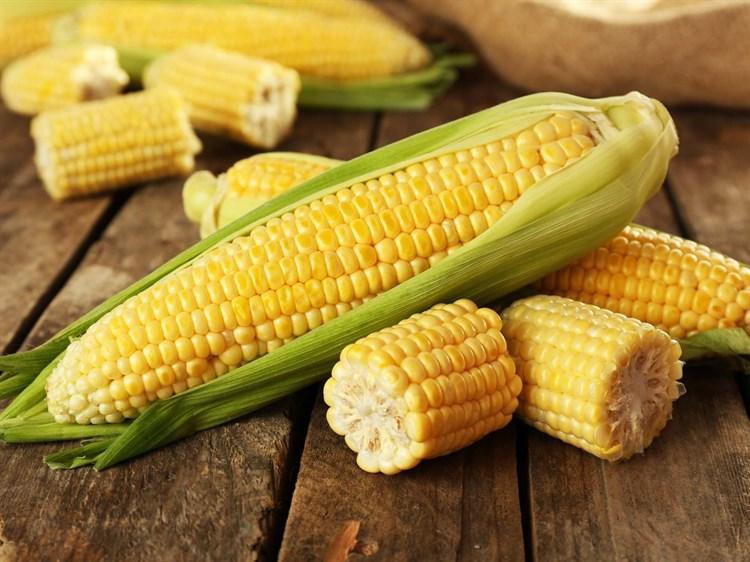 ГХ 5704 F1, семена кукурузы (Syngenta / Сингента) - фото 6082
