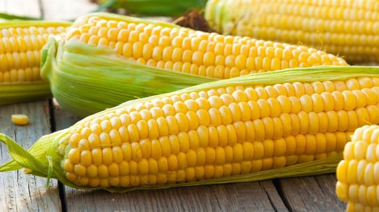 ГСС 3071 F1, семена кукурузы (Syngenta / Сингента) - фото 6083