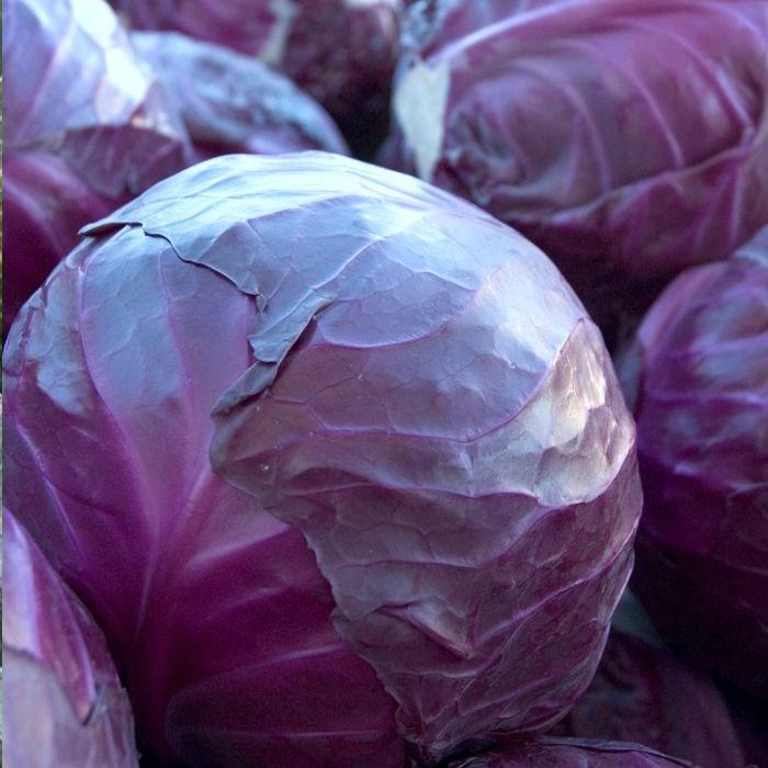 Регилиус F1, семена капусты краснокачанной (Syngenta / Сингента) - фото 6117