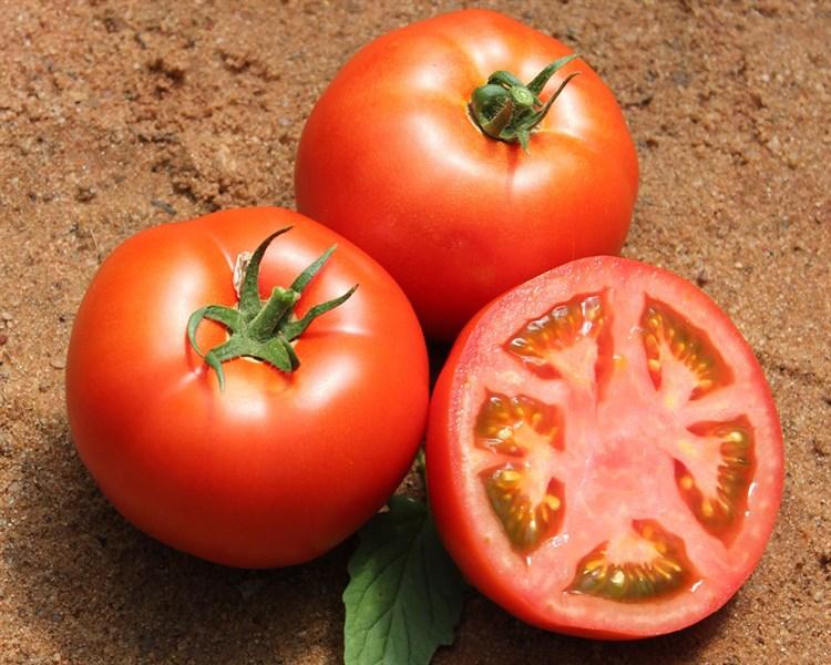 Бувена F1, семена томата индетерминантный (Syngenta / Сингента) - фото 6214