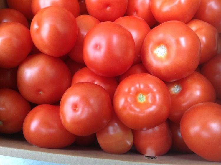 Раиса F1, семена томата индетерминантный (Syngenta / Сингента) - фото 6219