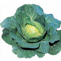 Суприм Вонтаж F1, семена капусты белокочанной (Sakata / Саката) - фото 6232