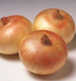 Сеншуй Еллоу Глоб, семена лука репчатого (Sakata / Саката) - фото 6296