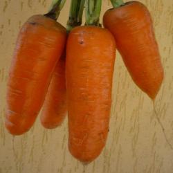 Шантеклер F1, семена моркови (Sakata / Саката) - фото 6302