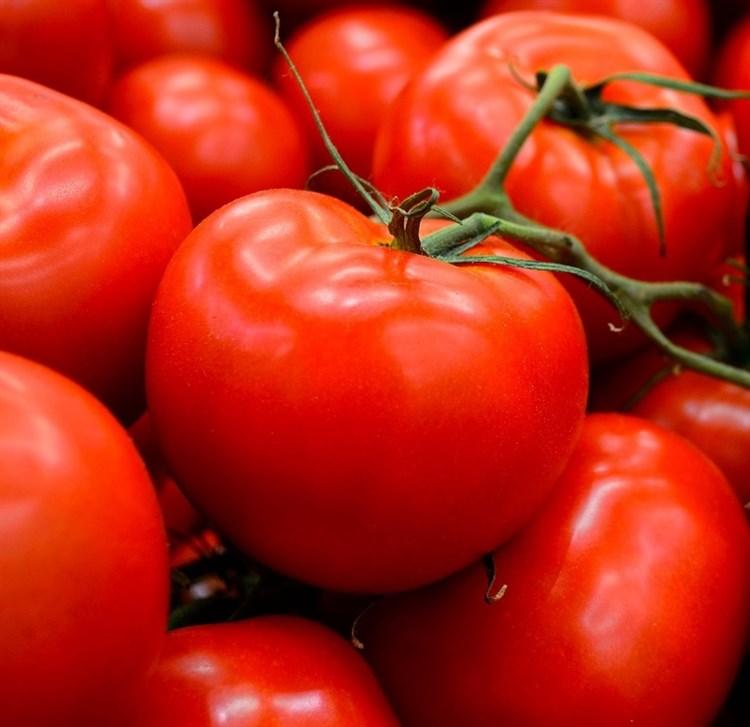 Америго F1, семена томата индетерминантного (Sakata / Саката) - фото 6369