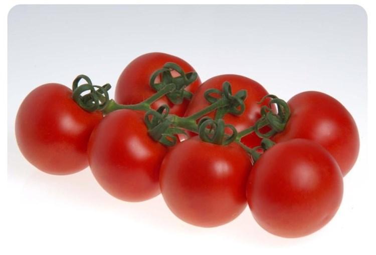 Сиде F1, семена томата индетерминантного (Sakata / Саката) - фото 6374