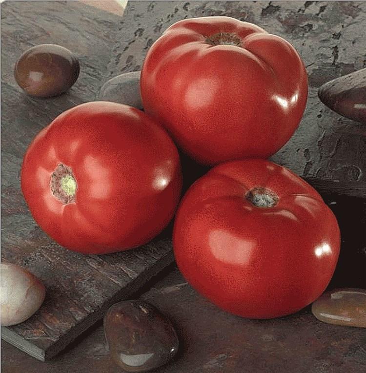 Бэлла Роса F1, семена томата детерминантного (Sakata / Саката) - фото 6378