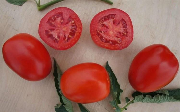Индио F1, семена томата детерминантного (Sakata / Саката) - фото 6388