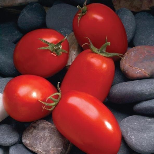 Мариана F1, семена томата детерминантного (Sakata / Саката) - фото 6390