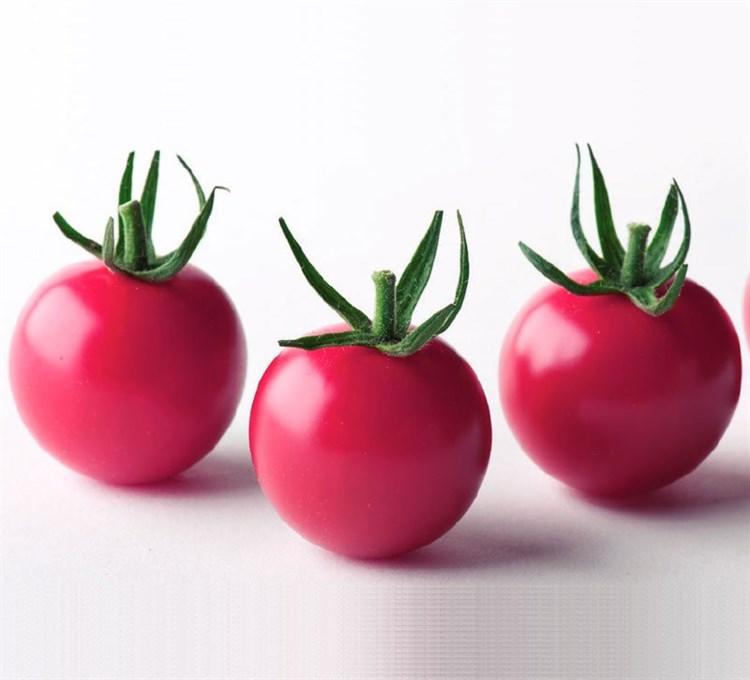 Рианна F1, семена томата индетерминантного (Sakata / Саката) - фото 6401