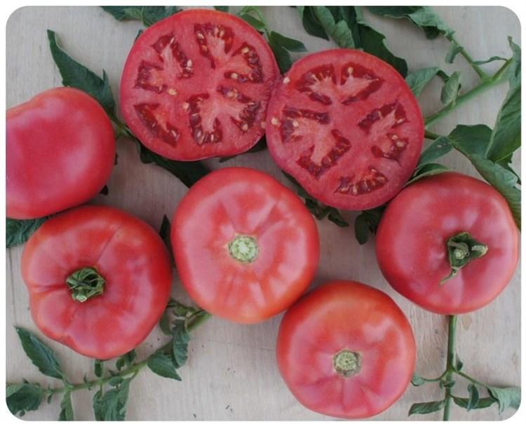Пинк Буш F1, семена томата детерминантного (Sakata / Саката) - фото 6402