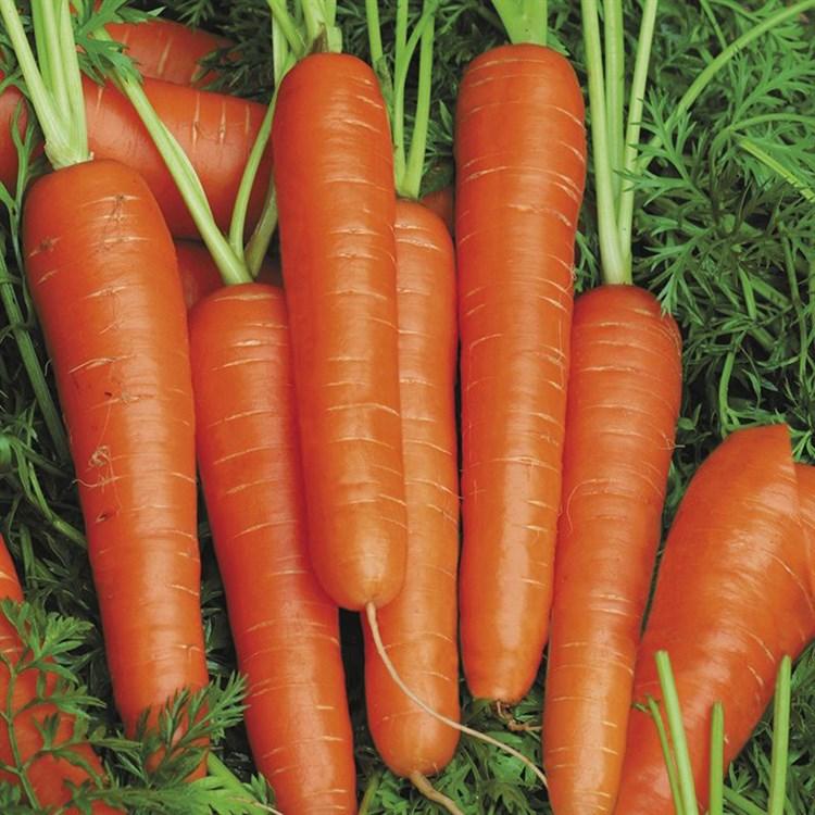 Спидо F1, семена моркови нантской (Vilmorin / Вильморин) - фото 6428