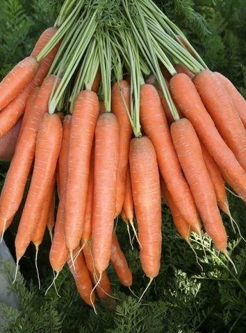 Престо F1, семена моркови нантской (Vilmorin / Вильморин) - фото 6429