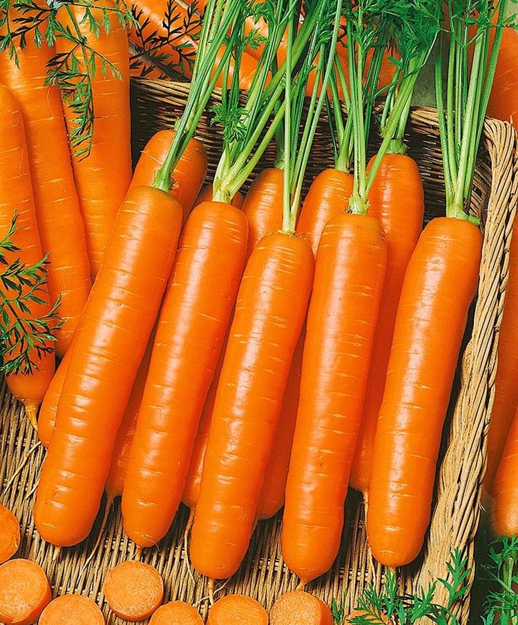 Сопрано F1, семена моркови нантской (Vilmorin / Вильморин) - фото 6437