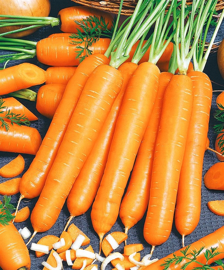 Маэстро F1, семена моркови нантской (Vilmorin / Вильморин) - фото 6442