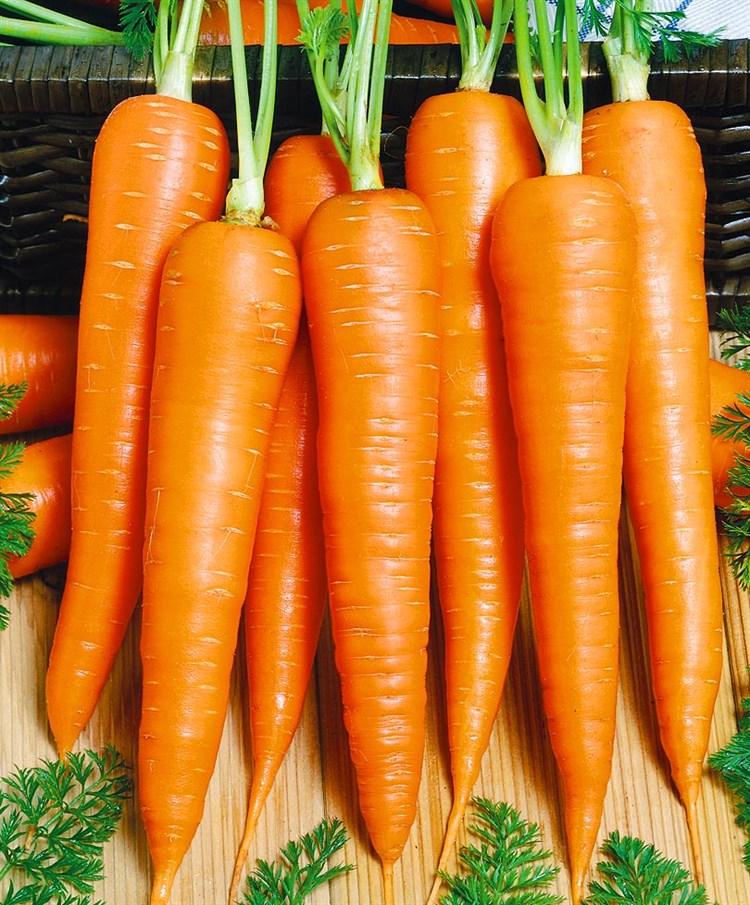 Эмперор F1, семена моркови курода/шантане (Vilmorin / Вильморин) - фото 6450