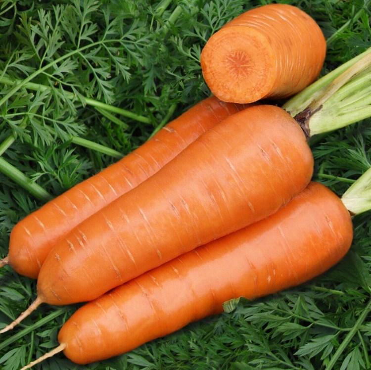 Ред Кор, семена моркови шантане (Vilmorin / Вильморин) - фото 6459